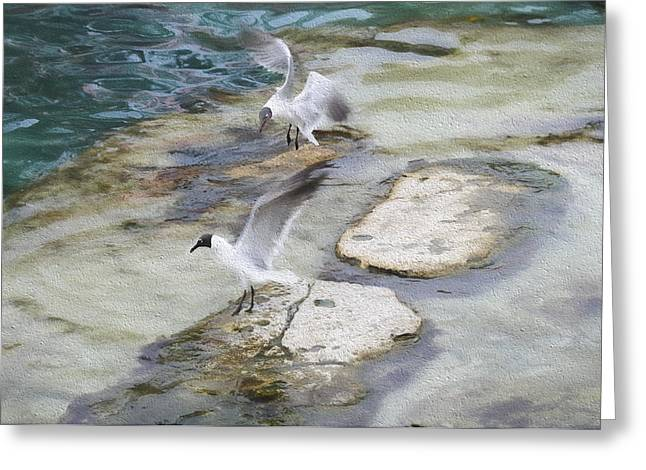 Tern On The Shore Greeting Card