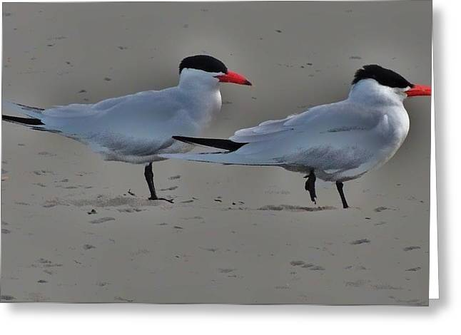 Terns In The Wind Greeting Card by Helen Carson