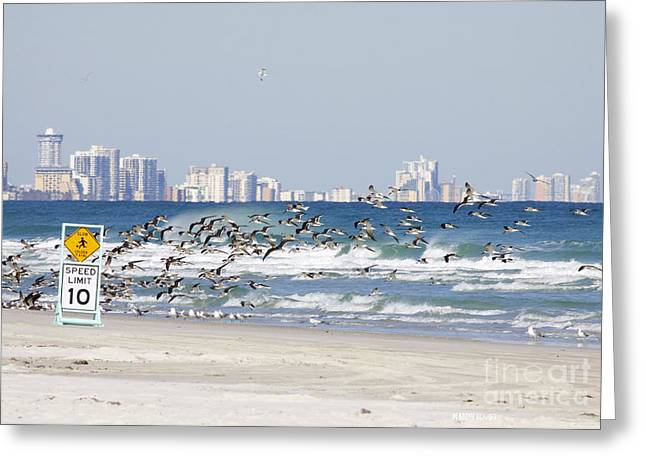 Terns On The Move Greeting Card by Deborah Benoit