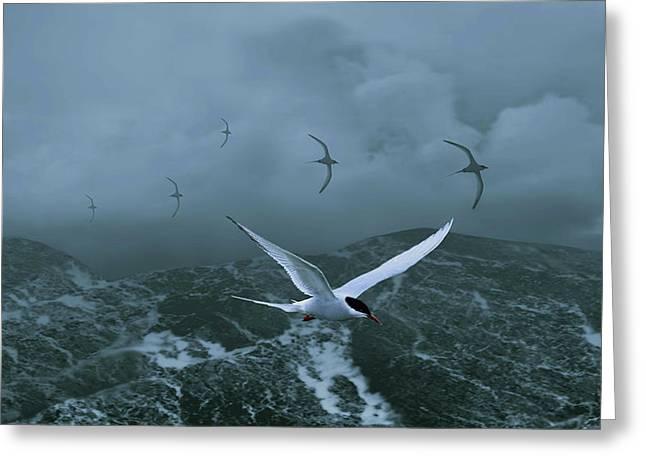Terns Over Stormy Seas Greeting Card by Schwartz