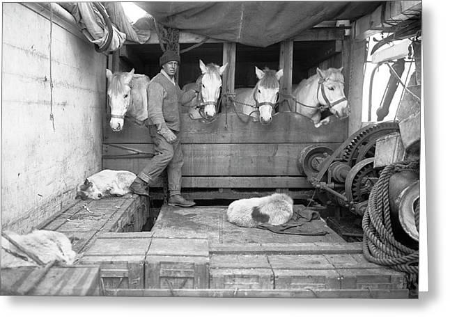 Terra Nova Antarctic Ponies Greeting Card by Scott Polar Research Institute