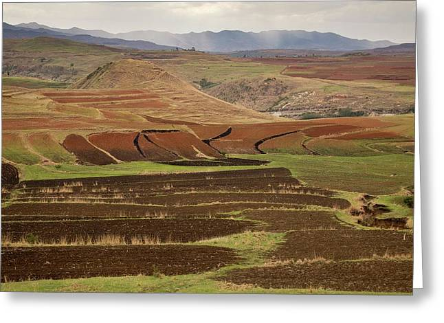 Terraced Fields Greeting Card by Bob Gibbons