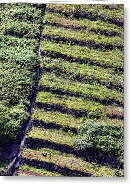 Terraced Fields In Madeira Greeting Card by Dr Juerg Alean