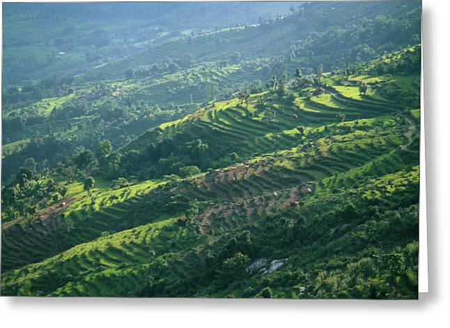 Terraced Fields Greeting Card
