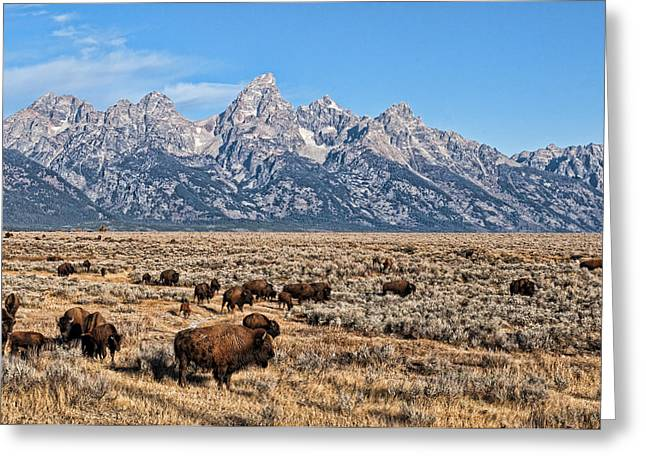 Greeting Card featuring the photograph Teton Buffalo by David Armstrong