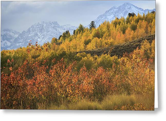Teton Fall Greeting Card by Jennifer Grover
