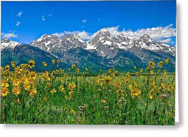 Teton Peaks And Flowers Greeting Card by Greg Norrell