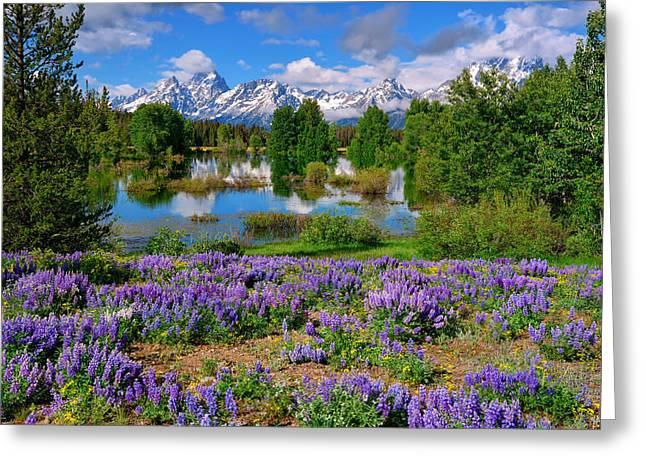 Teton Spring Lupines Greeting Card