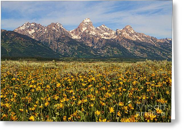 Tetons And Yellow Greeting Card by Edward R Wisell