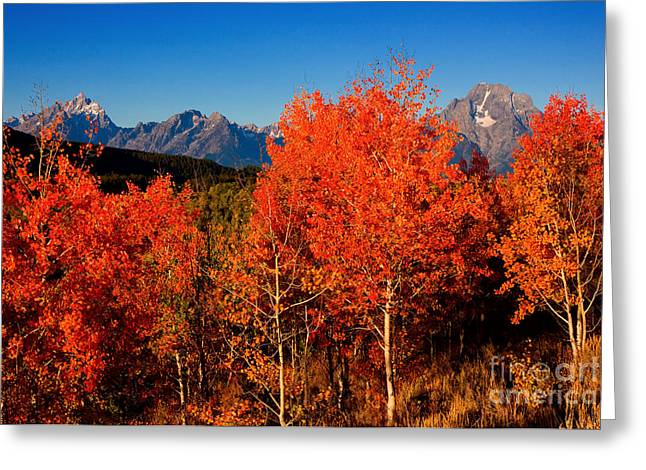 Greeting Card featuring the photograph Tetons Colors Of Autumn by Aaron Whittemore