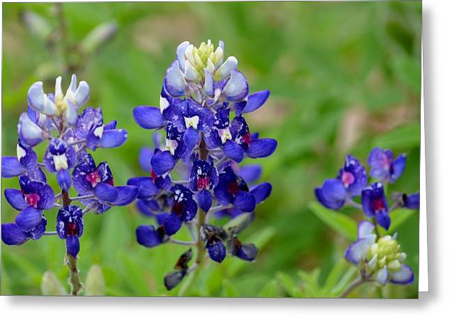 Greeting Card featuring the photograph Texas Bluebonnets by Debra Martz