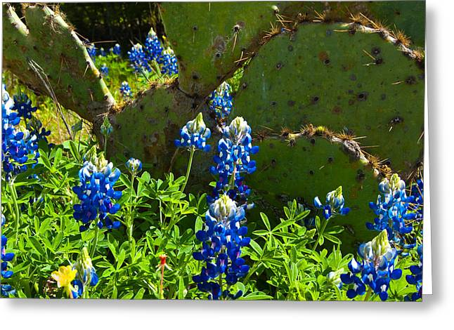 Texas Blue Bonnets Greeting Card by Mark Weaver