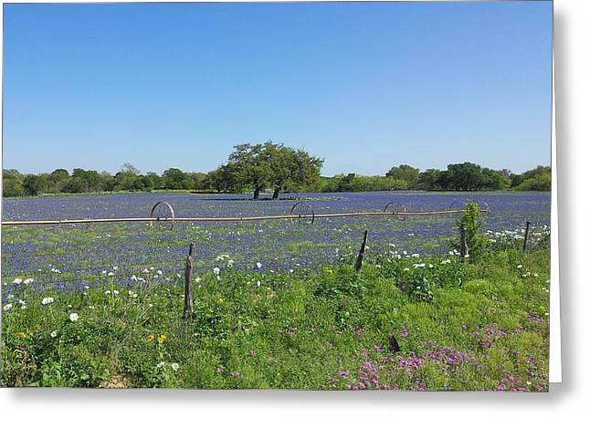 Texas Blue Bonnets Greeting Card