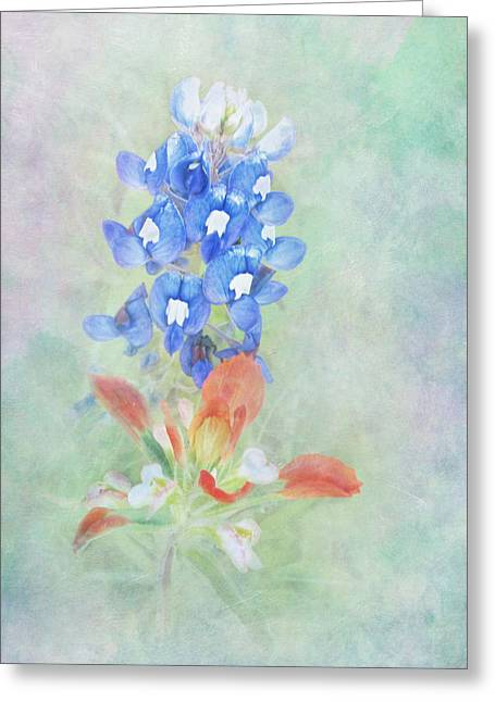 Texas Bluebonnet And Indian Paintbrush Greeting Card