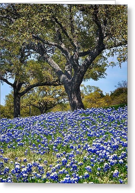 Texas Bluebonnet Hill Greeting Card