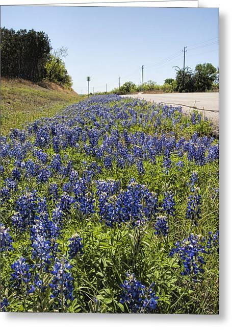 Texas Bluebonnet Roadside Wildflowers Greeting Card