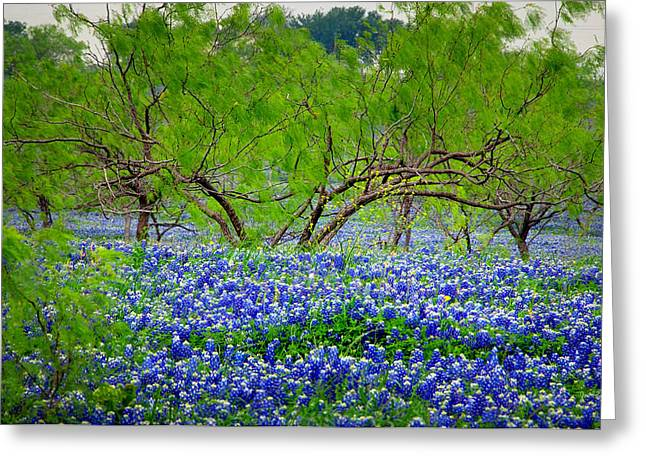 Texas Bluebonnets - Texas Bluebonnet Wildflowers Landscape Flowers Greeting Card by Jon Holiday