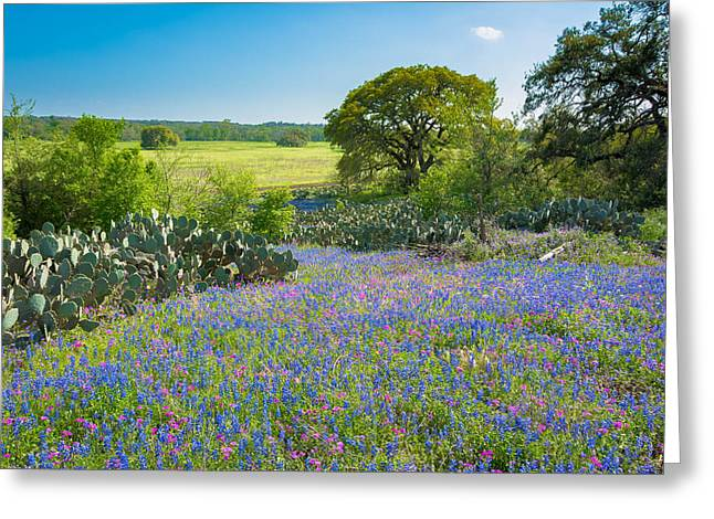 Texas Bluebonnets And Cactus Greeting Card