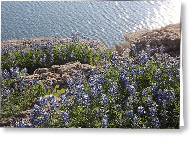 Texas Bluebonnets At Lake Travis Greeting Card by Rebecca Cearley