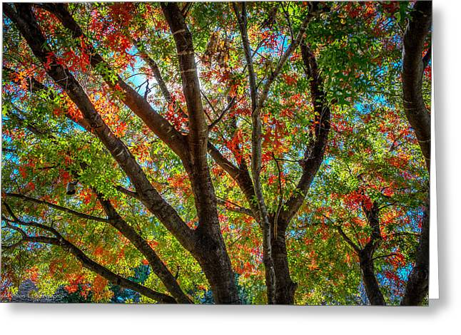 Greeting Card featuring the photograph Texas Fall Glory by Ross Henton
