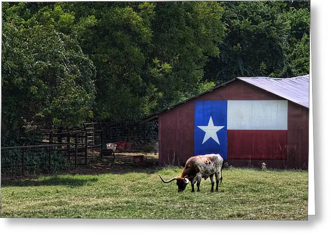 Texas Longhorn Grazing Greeting Card