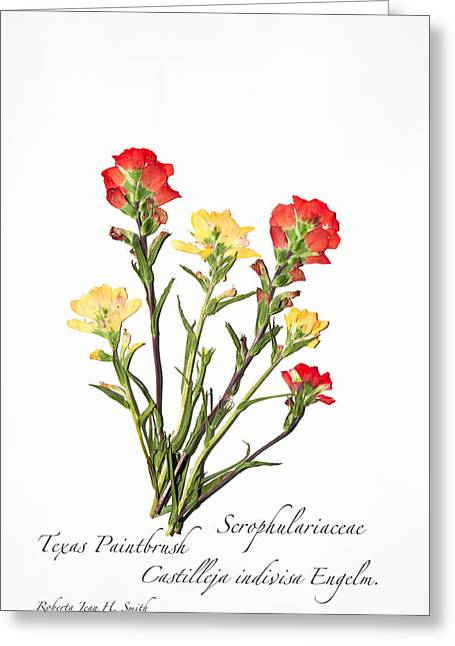 Texas Paintbrush 1 Greeting Card