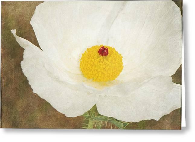 Texas Prickly Poppy Wildflower Greeting Card