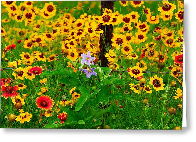 Texas Spring Delight Greeting Card