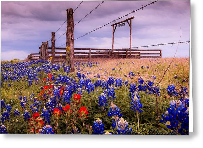 Texas Spring Fence Greeting Card