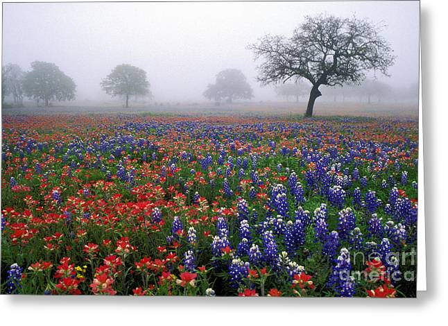 Texas Spring - Fs000559 Greeting Card