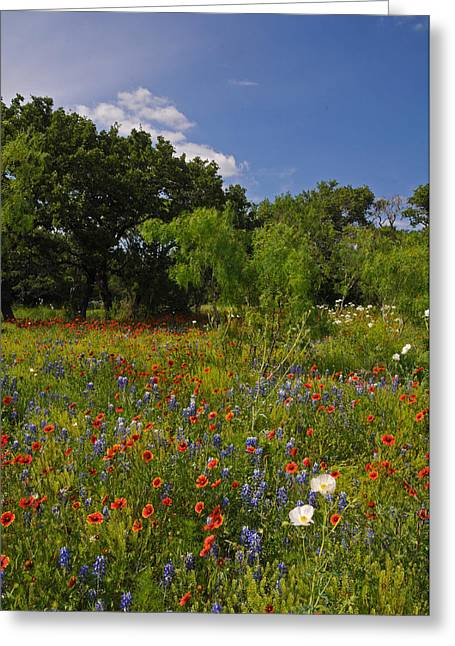 Texas Spring Spectacular Greeting Card