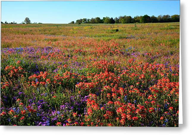 Texas Spring Wildflowers Greeting Card by Lynn Bauer