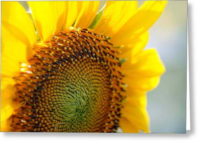 Texas Sunflower Greeting Card