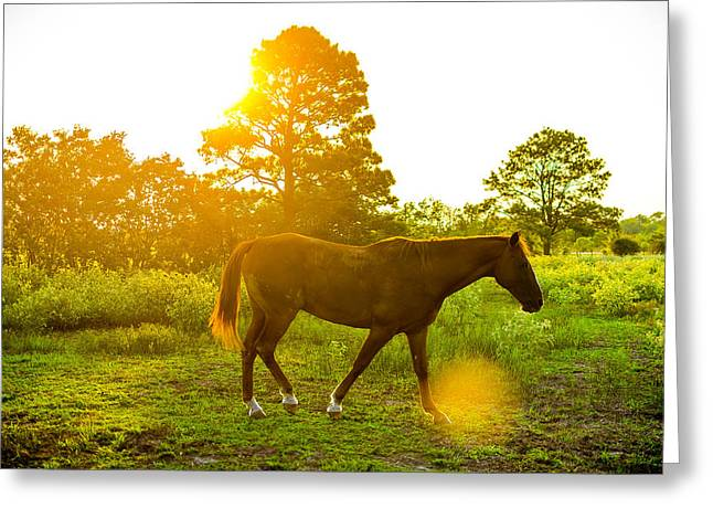 Texas Sunset Greeting Card by David Morefield