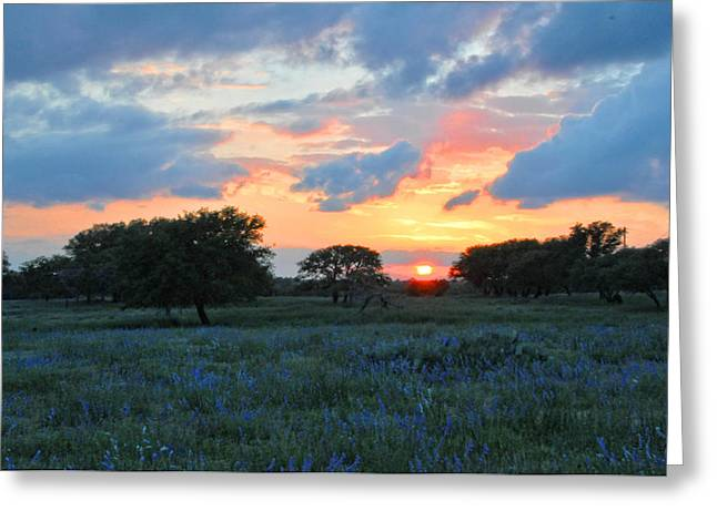 Texas Wildflower Sunset  Greeting Card