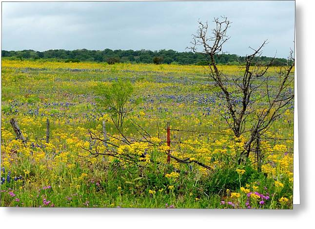 Texas Wildflowers And Mesquite Tree Greeting Card