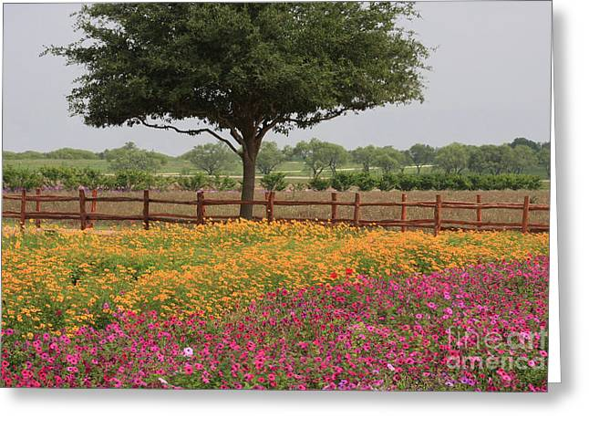 Texas Wildflowers Greeting Card by Jerry Bunger