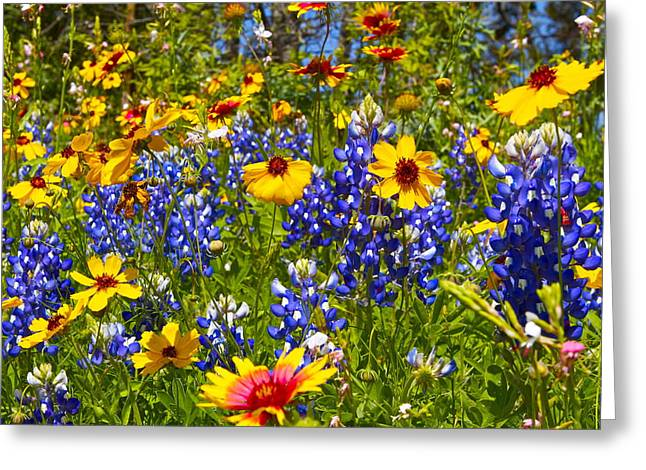 Texas Wildflowers Greeting Card by John Babis