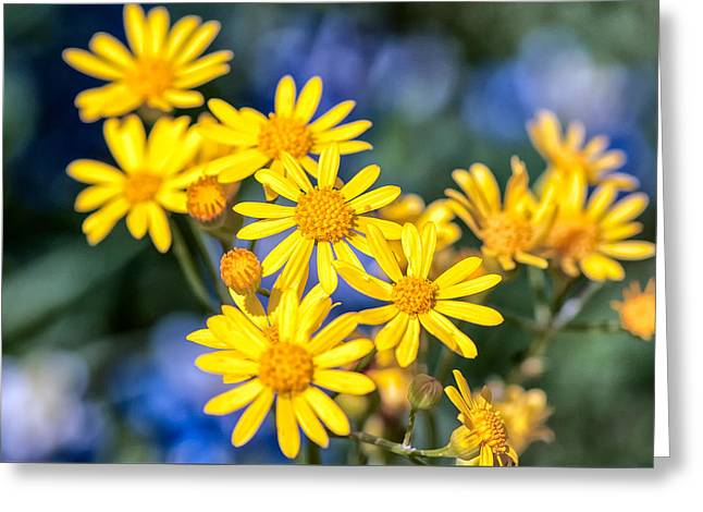 Texas Wildflowers 1 Greeting Card