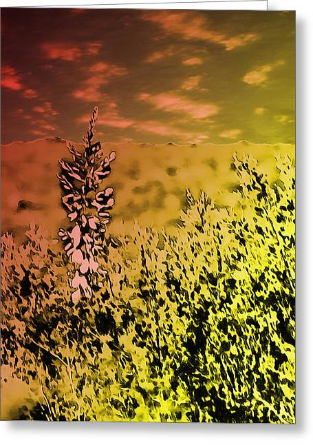 Texas Yucca Flower Greeting Card by Bartz Johnson