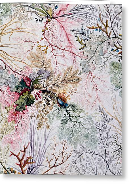 Textile Design Greeting Card by William Kilburn