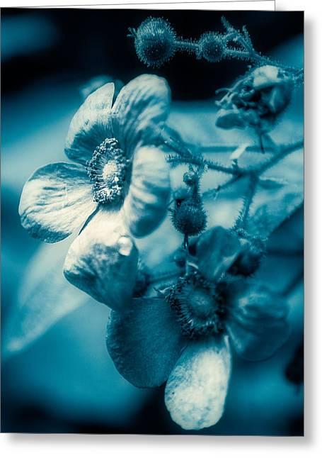 Texture Flower Greeting Card by Ken Beatty