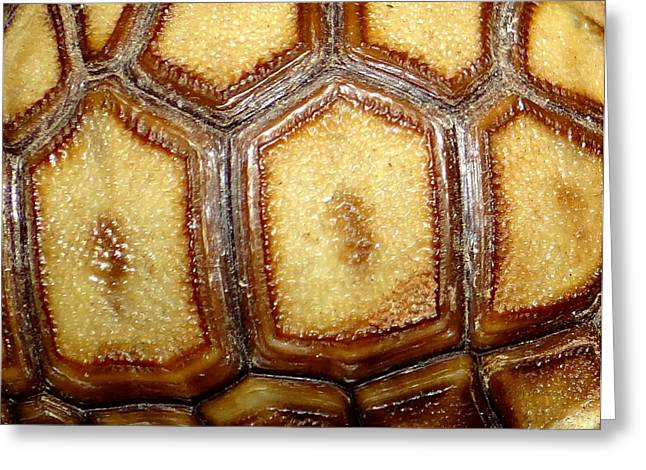 Texture Tortoise Shell Greeting Card