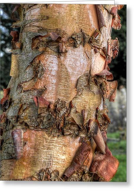 Textured Bark Greeting Card