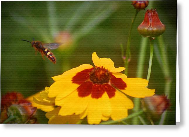 Greeting Card featuring the photograph Textured Bee by Leticia Latocki