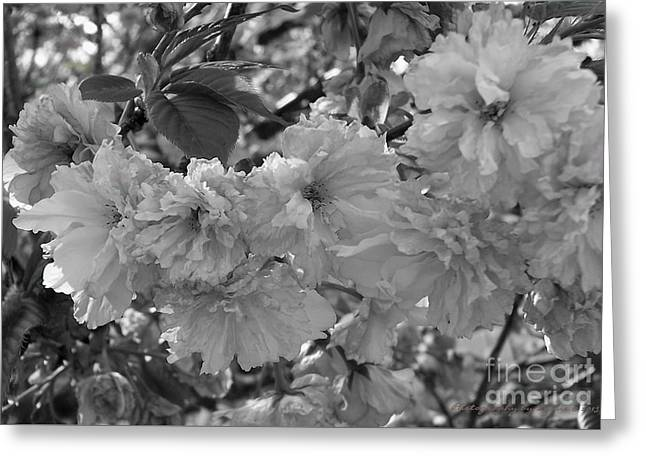 Greeting Card featuring the photograph Textured Black And White Cherry Blossoms by Gena Weiser