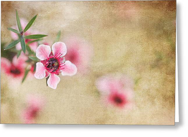 Textured Blossoms Greeting Card by Terry Ellis