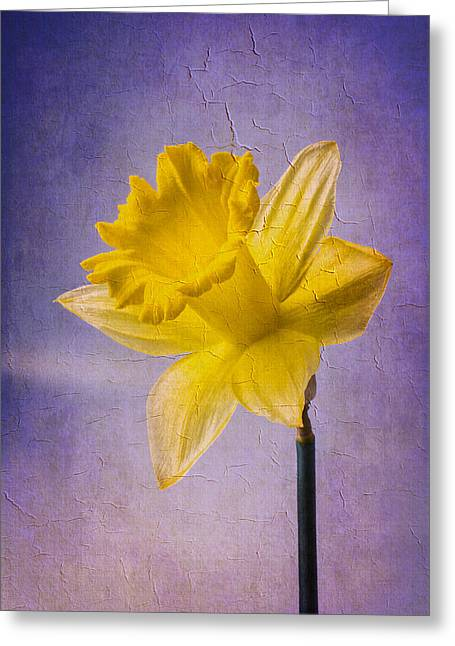 Textured Daffodil Greeting Card by Garry Gay