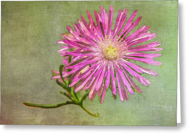 Textured Daisy Greeting Card