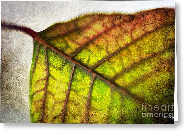 Textured Leaf Abstract Greeting Card by Scott Pellegrin